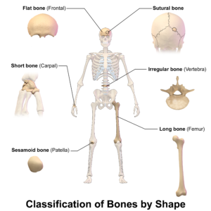 Bones Shapes at Mahi Yoga Centre