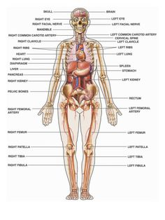 yoga teacher training in india anatomy and physiology syllabus, Human Body