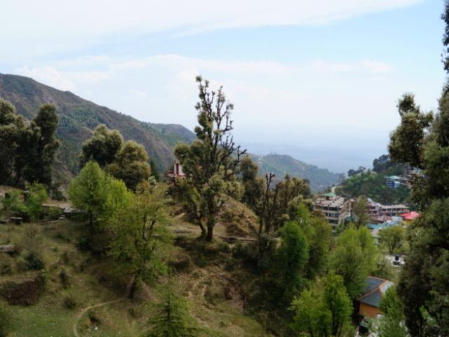 Mahi Yoga Accommodation in Dharamsala