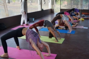 200 Hours yoga teacher training courses in India at Mahi Yoga